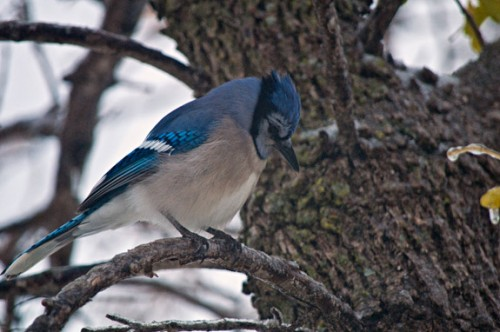 The Yard looked like a Blue Jay convention at one point. This guy was one of the attendees.