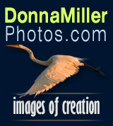 Donna Miller Wildlife Photography featuring Images of Creation